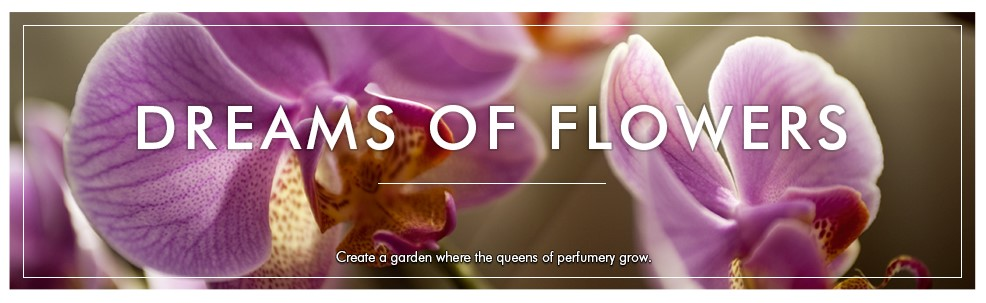 banner-dreams-of-flowers